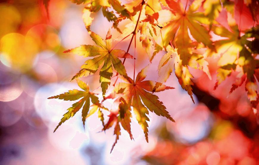 De herfst is begonnen